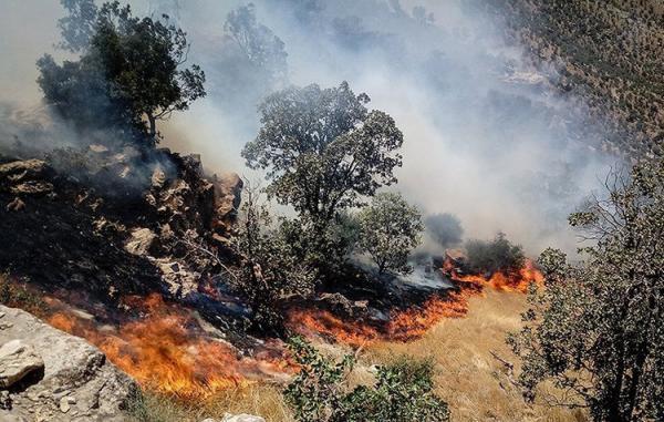 مهار آتش سوزی جنگل های منطقه حفاظت شده دیل گچساران