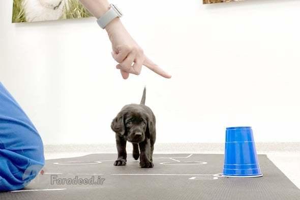 چگونه سگ ها از بدو تولد، انسان ها را می فهمند؟
